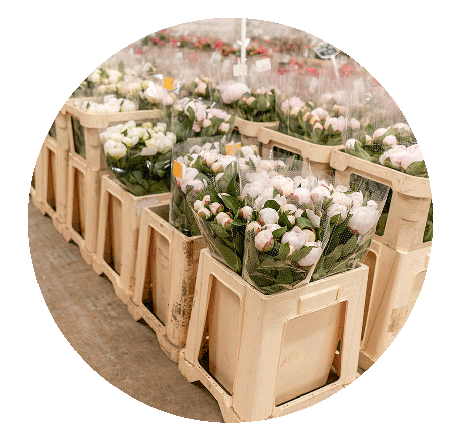 Cônes pour fleurs